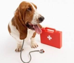 Basic Pet First-Aid Class: POSTPONED