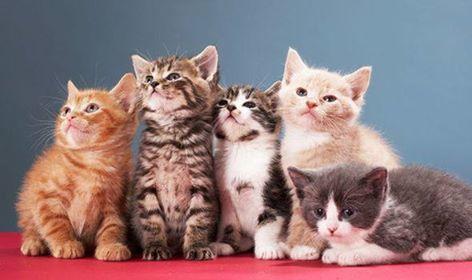 Kitten Palooza Time!