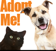 31 Adoptions in 31 Days & Mystery Adoption Fee Discounts