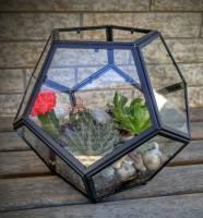 terrarium, plants, plant, lumsden, regina, craven, regina beach, buena vista, succulent, hibiscus, cactus