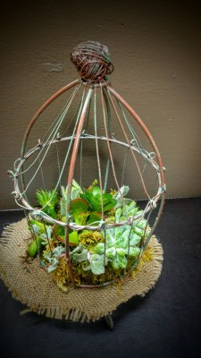 succulent birdcage, happy, cheerful flowers, bouquet, entertainers, vase, lumsden, regina, craven, regina beach, buena vista