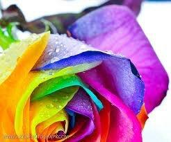 crayon rose, lumsden, regina, delivery, mothers