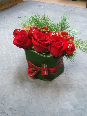 pine, winter, red, roses, christmas, valentines