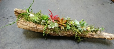 succulent, airplant, happy, cheerful flowers, bouquet, entertainers, vase, lumsden, regina, craven, regina beach, buena vista