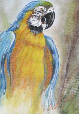 Parrot $50