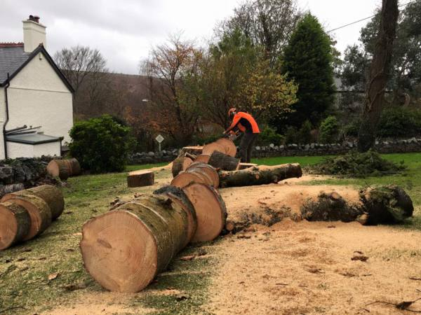 logging and felling