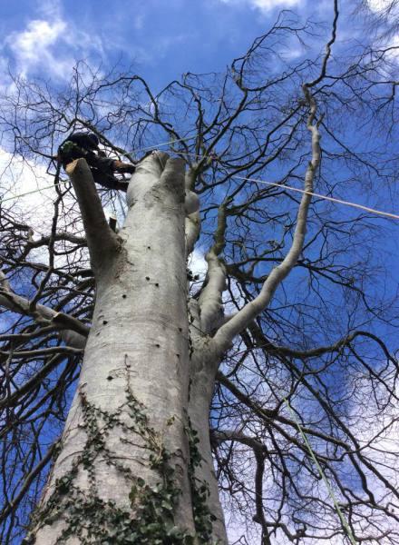 tree dismantle gwynedd