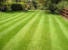 Torri Gwair a Gofal Tir  Grass Cutting and Ground Maintanance