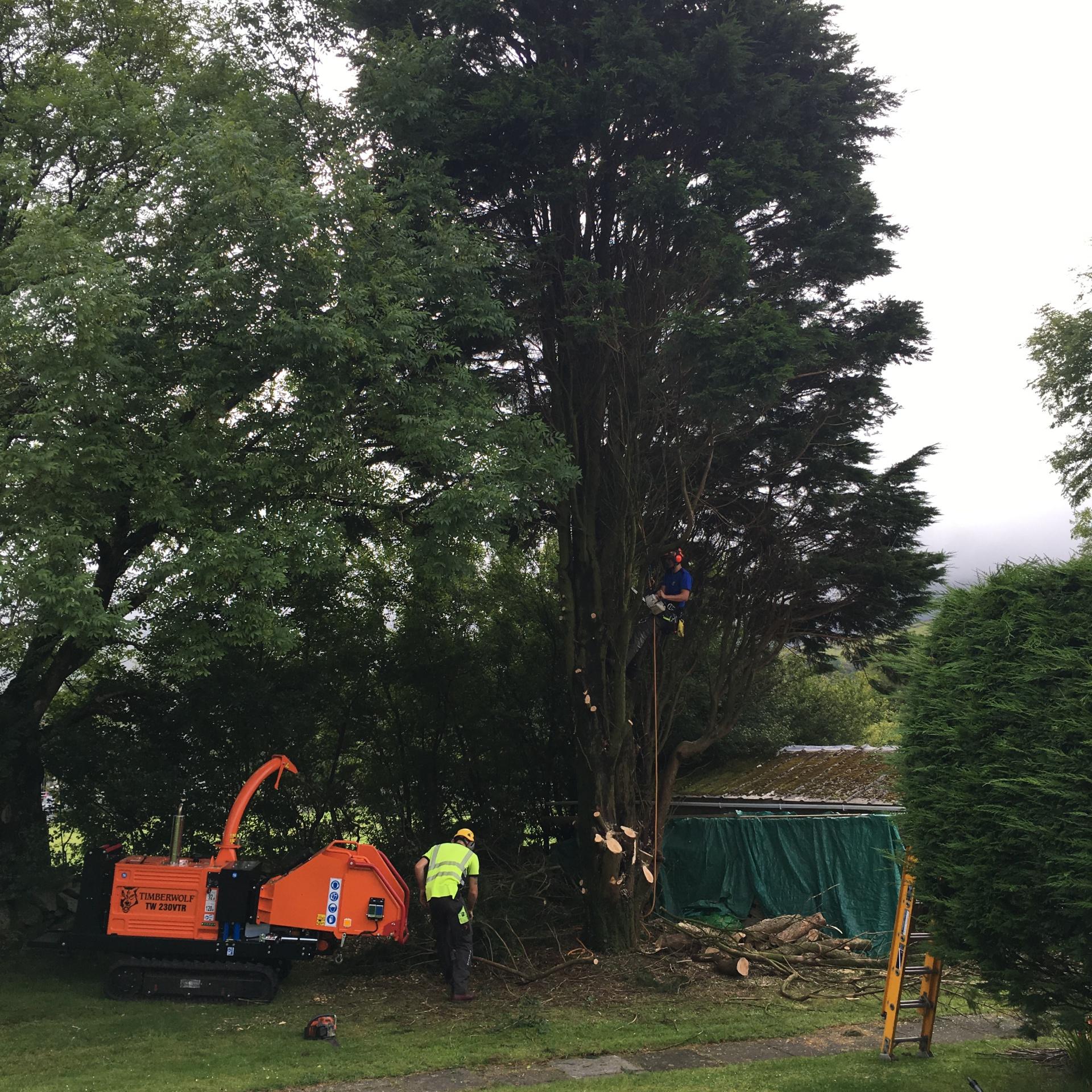 tree surgery gwynedd