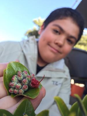 Teaching Change Program, Budding Ohia Flower