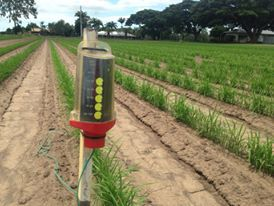 Using G-Dots in Sugarcane