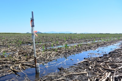 New Irrigation Management Technology in the Burdekin!