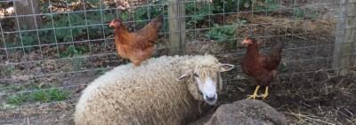 Ol' McMary Had a Farm, e-i-e-i-oooooo!