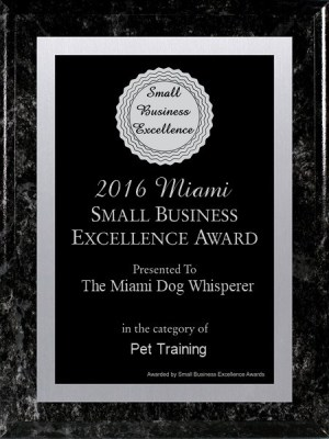 Richard Heinz, Miami Dog Whisperer, Dog trainer, dog behaviorist, dog trainer in miami, miami dog training, doral dog training, dog training expert, best dog trainer, aggression trainer, famous dog trainer, dog whisperer, protection K9 training, protection dog training, family protection dog, personal protection dog, german shepherd, dog training in miami, dog trainer in miami, doral dog trainer, coral gables dog trainer, miami beach dog trainer, dog trianer to the stars, positive dog training, obedience dog training, free evaluation, dog trainer, miami dog whisperer, dog force 1, dog training videos, dog training online, aggressive dog training, remote collar training, positive dog training, electric collar dog training, miami dog training, doral dog training, coral gables dog training, pinecrest dog training, obedience training, potty training, puppy training, affordable dog training, dog training in my area