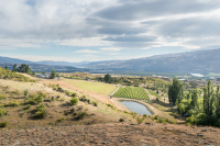 Cromwell, Bannockburn, Stewart Town, Wine, New Zealand, Export, Functions, Pinot Noir