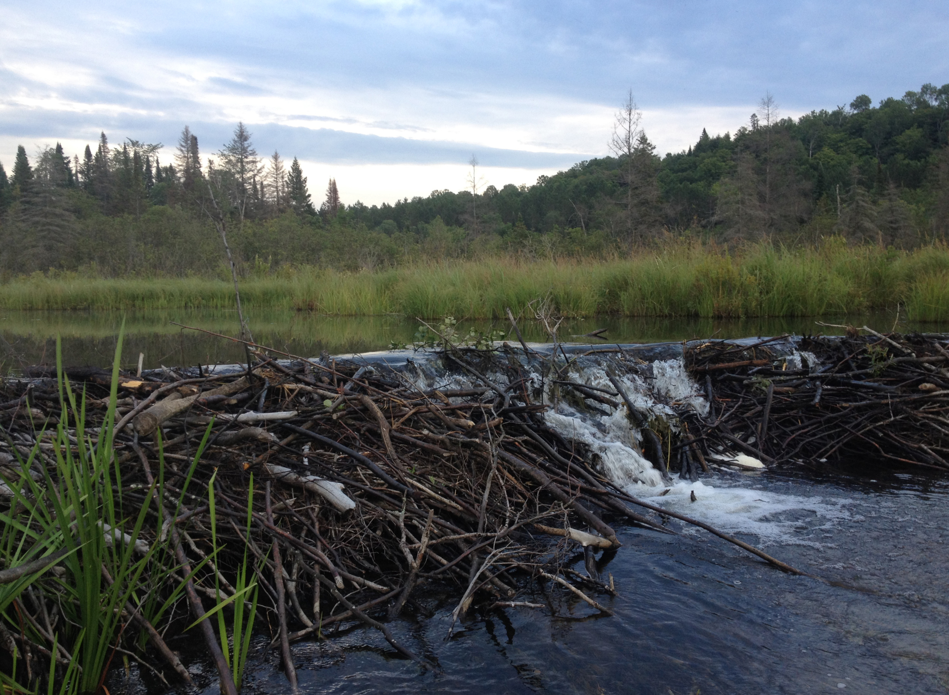 Visit a beaver dam