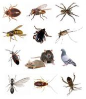 We Manage Pest That Can Affect Your Business