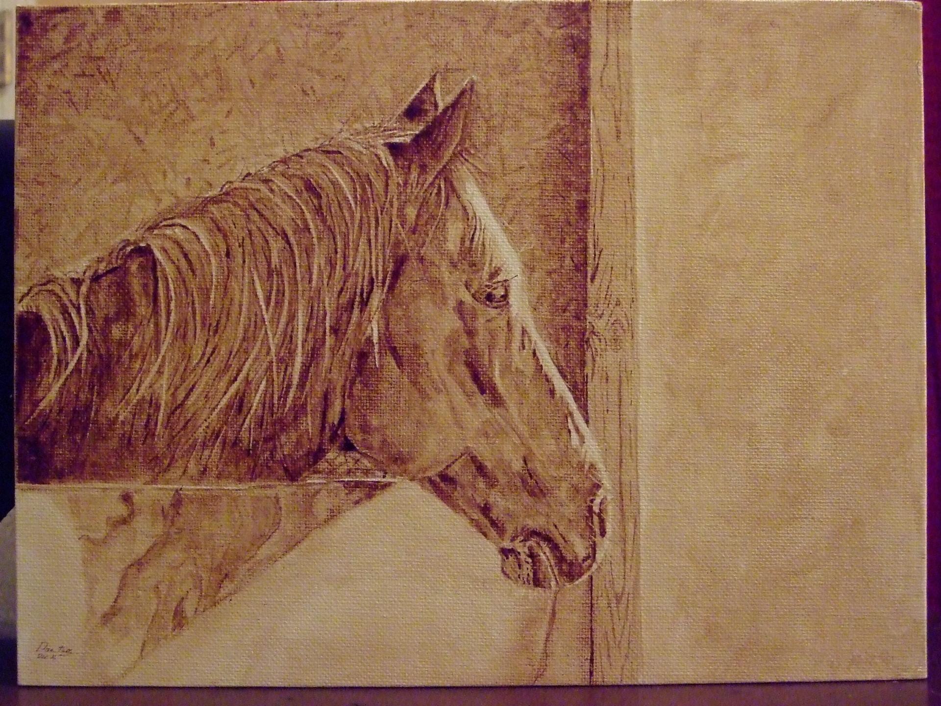 Lt's Horse
