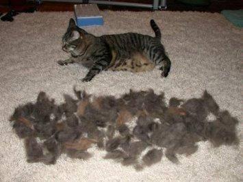 Cat Desheding