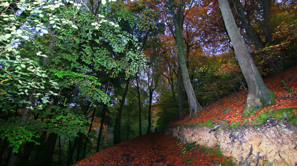 Stinchcombe Hill Woods