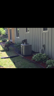 poly edging, and mulch