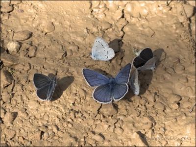 Butterflies, moths, and nanotechnology