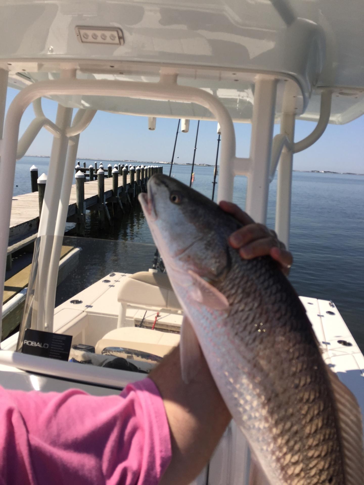 Fish on boat
