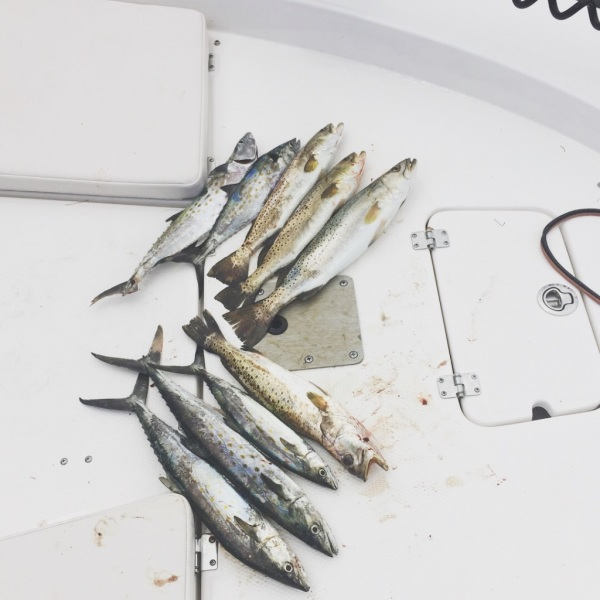 Multiple fish on boat