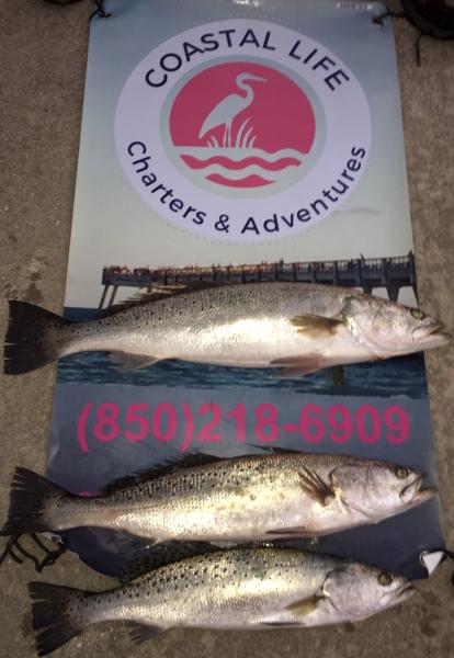 Fish from Navarre, FL