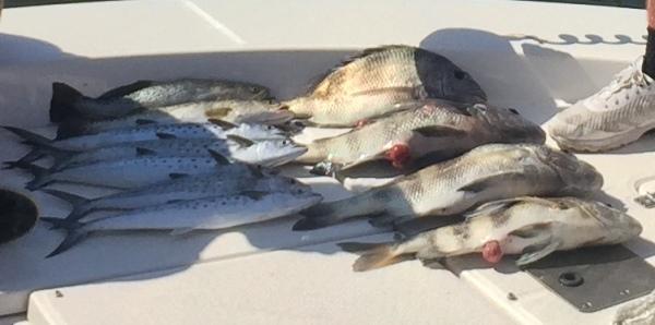 Many fish on boat