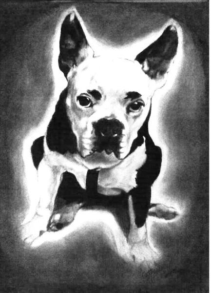 Dog 13