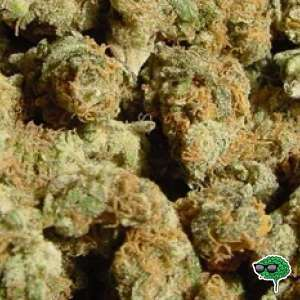 Girl Scout Cookies Strain or GSC