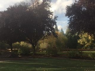 Beautiful Outdoor Setting