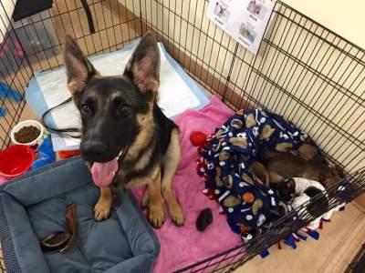 Minka, Adoption Event Petco, Petsmart, Dogs of  Hilltown