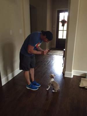 Boston Terrier, Dog Trainer