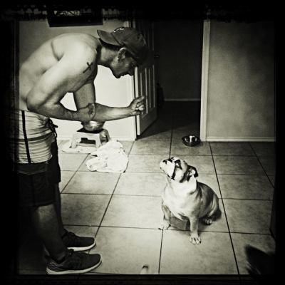 Hard To Train Bulldog