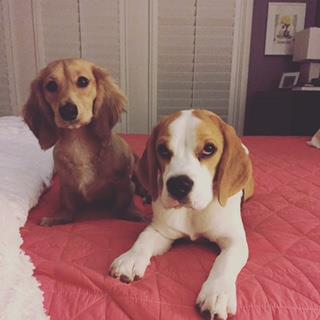 Bark in The Park, Aubrey, Dog Trainer