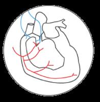 Cardiac Autonomic reflex tests, HVR