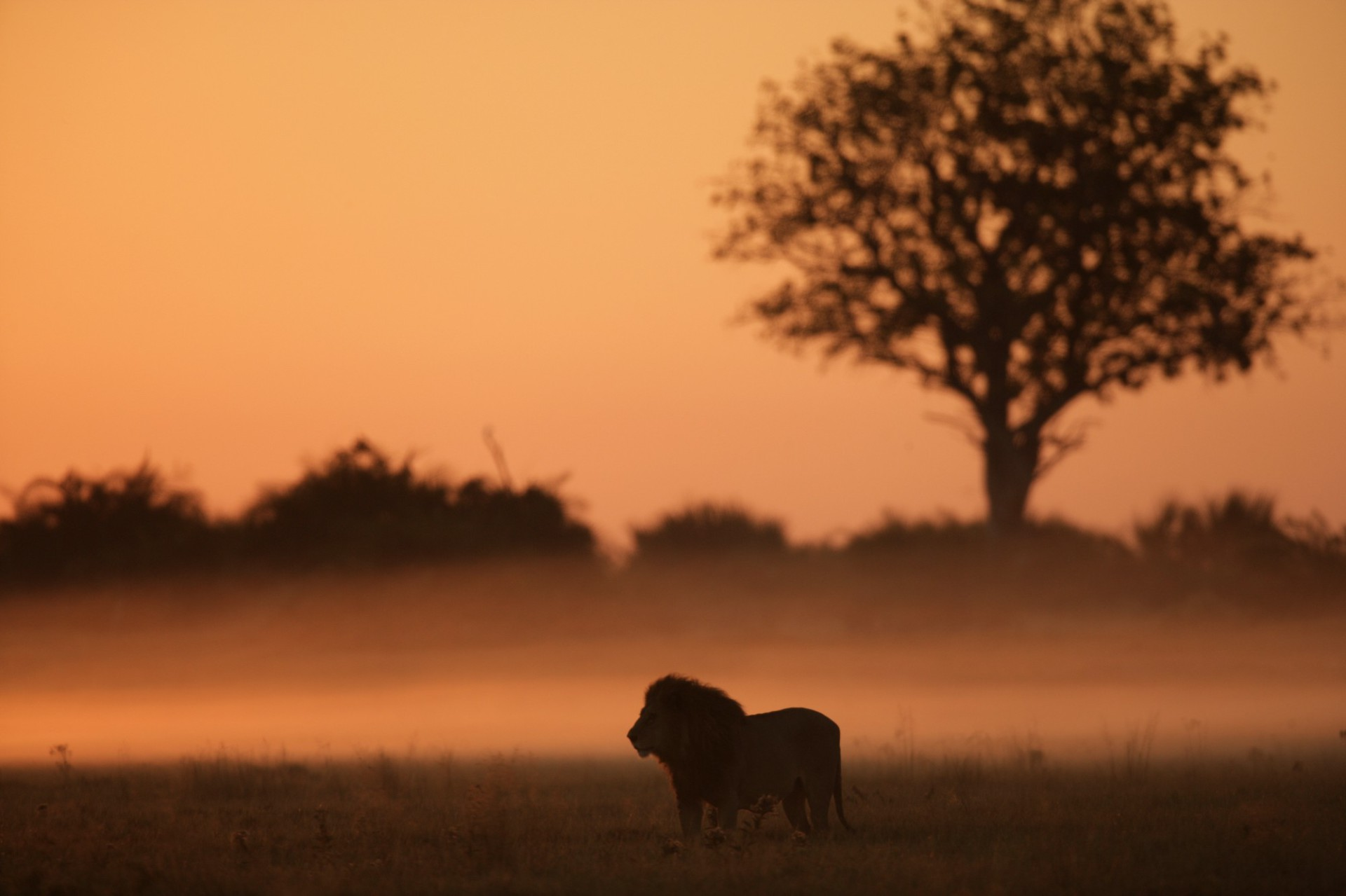 Cecil's Legacy: Protecting Big Cats in Africa