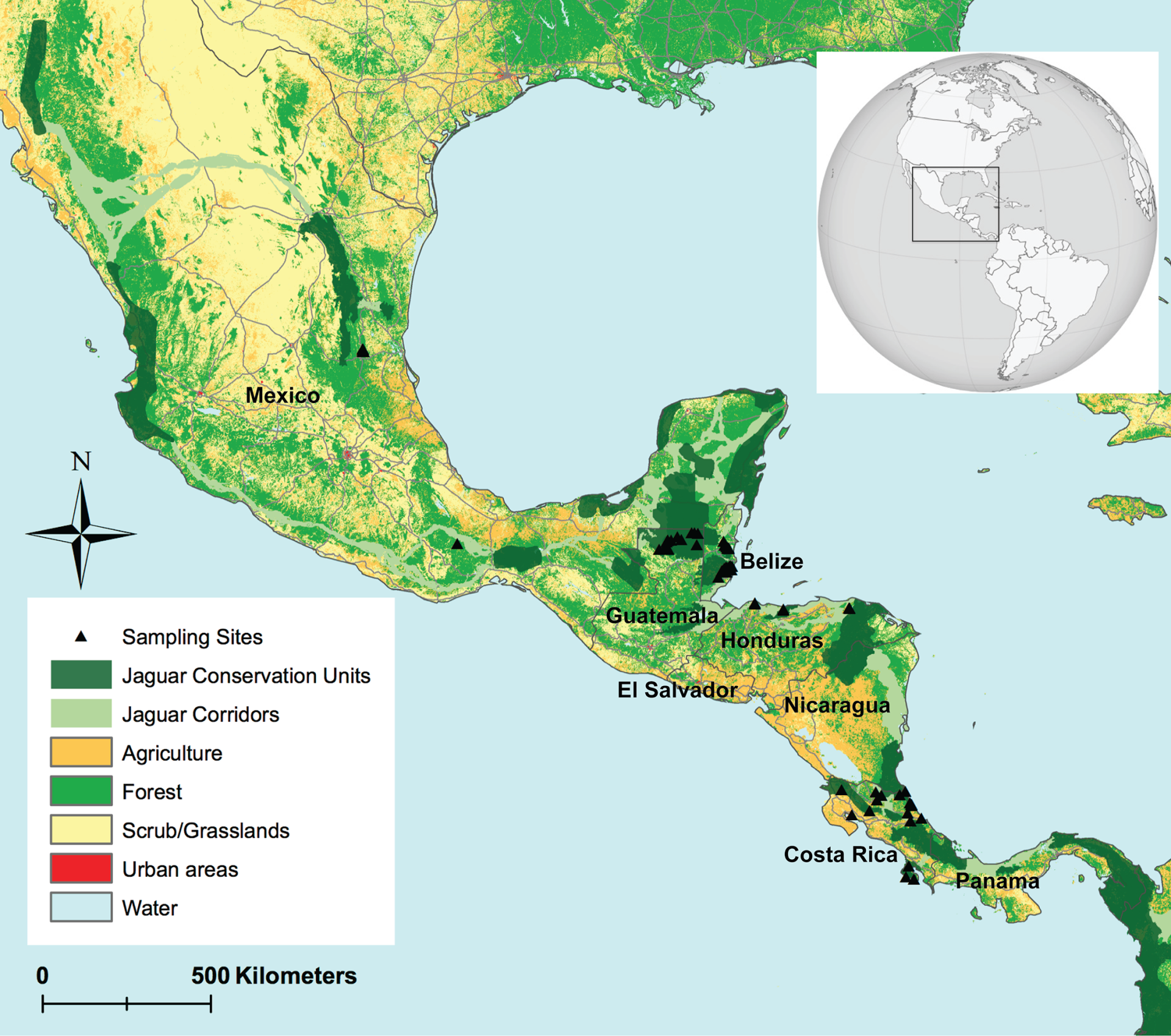 Genetic Diversity and Population Structure of Mesoamerican Jaguars (Panthera onca): Implications for Conservation and Management