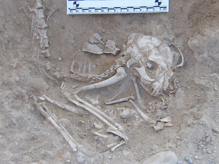 Oldest Known Evidence Of Cat Taming Found In Cyprus