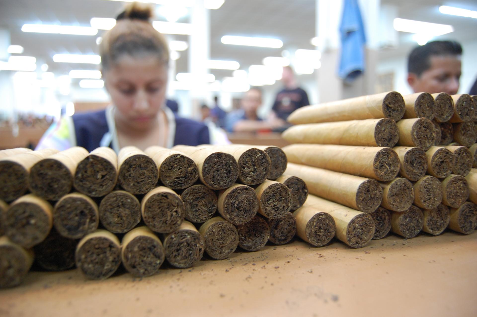 Fresh freshly hand rolled cigars