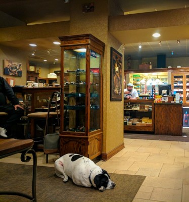 Dog friendly in store seating