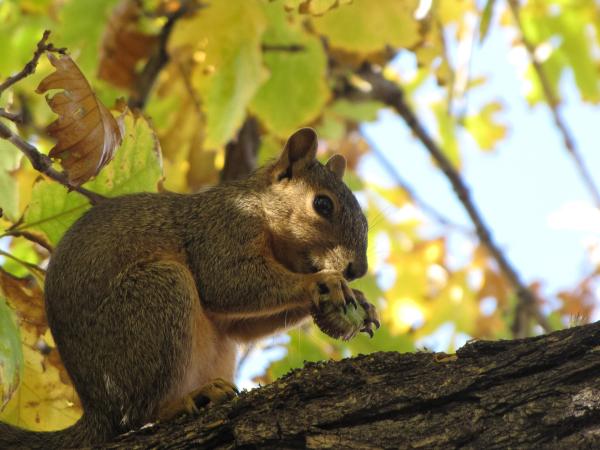 Colorado Squirrel