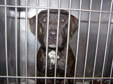 NMP Animal Shelter - SUPPORT