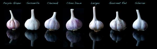The Garlic Clinic