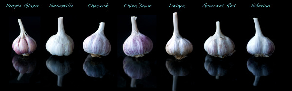 The Garlic Clinic