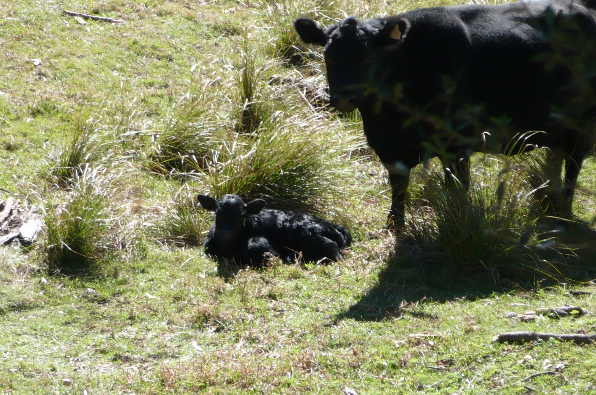 Pasture Fed Beef