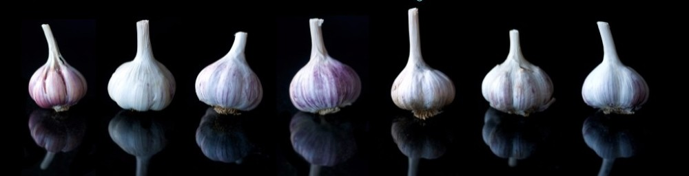 South Coast Garlic