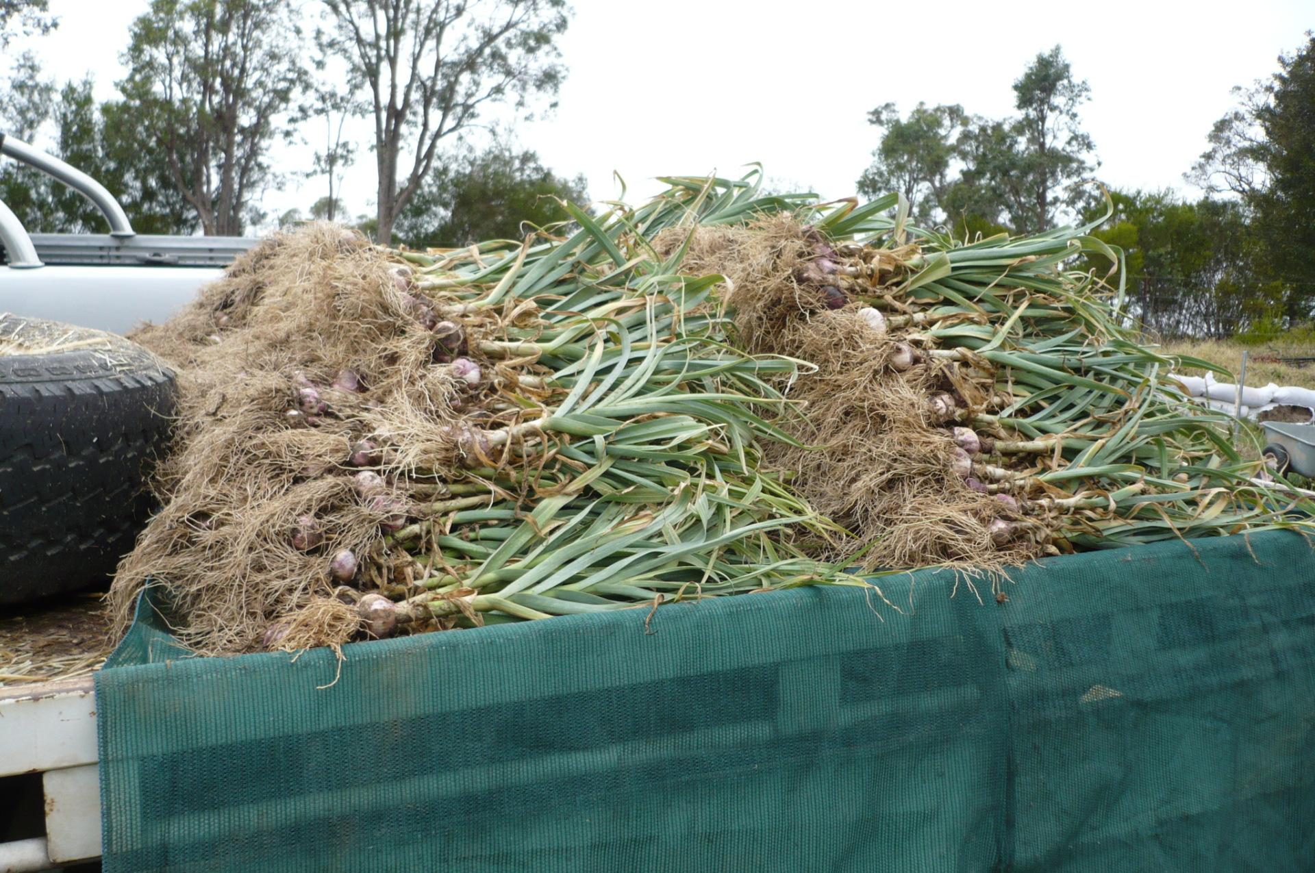 Manually harvested
